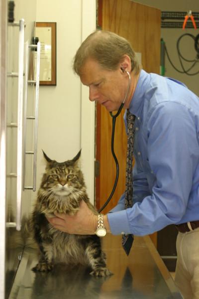 watkins-examining-cat