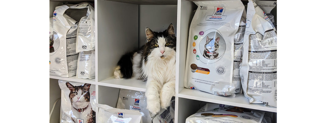 lobby-cat-on-shelf